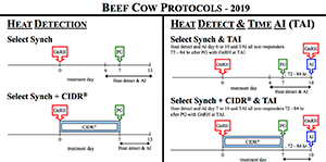 2019 Recommended Protocols For Beef Heifers And Cows